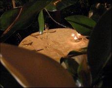 Ristorante Magnolia di Cesenatico